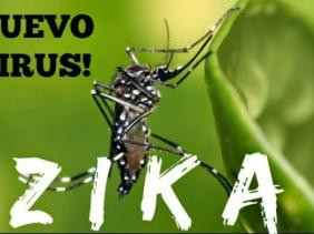 La COI se mobilise face au virus Zika